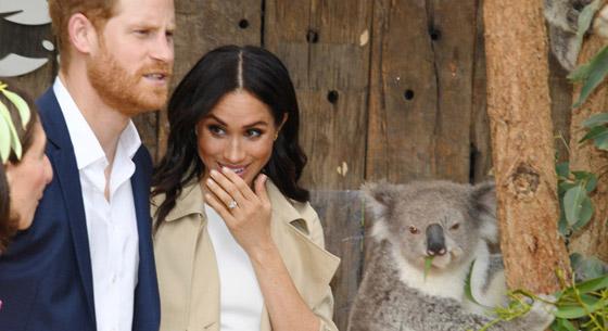 哈里王子夫妇访澳参观动物园 开心逗考拉表情神同步